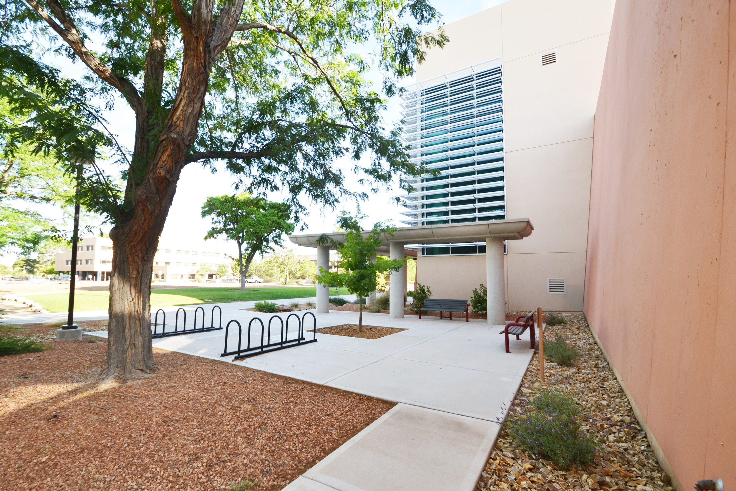 Low water use courtyard