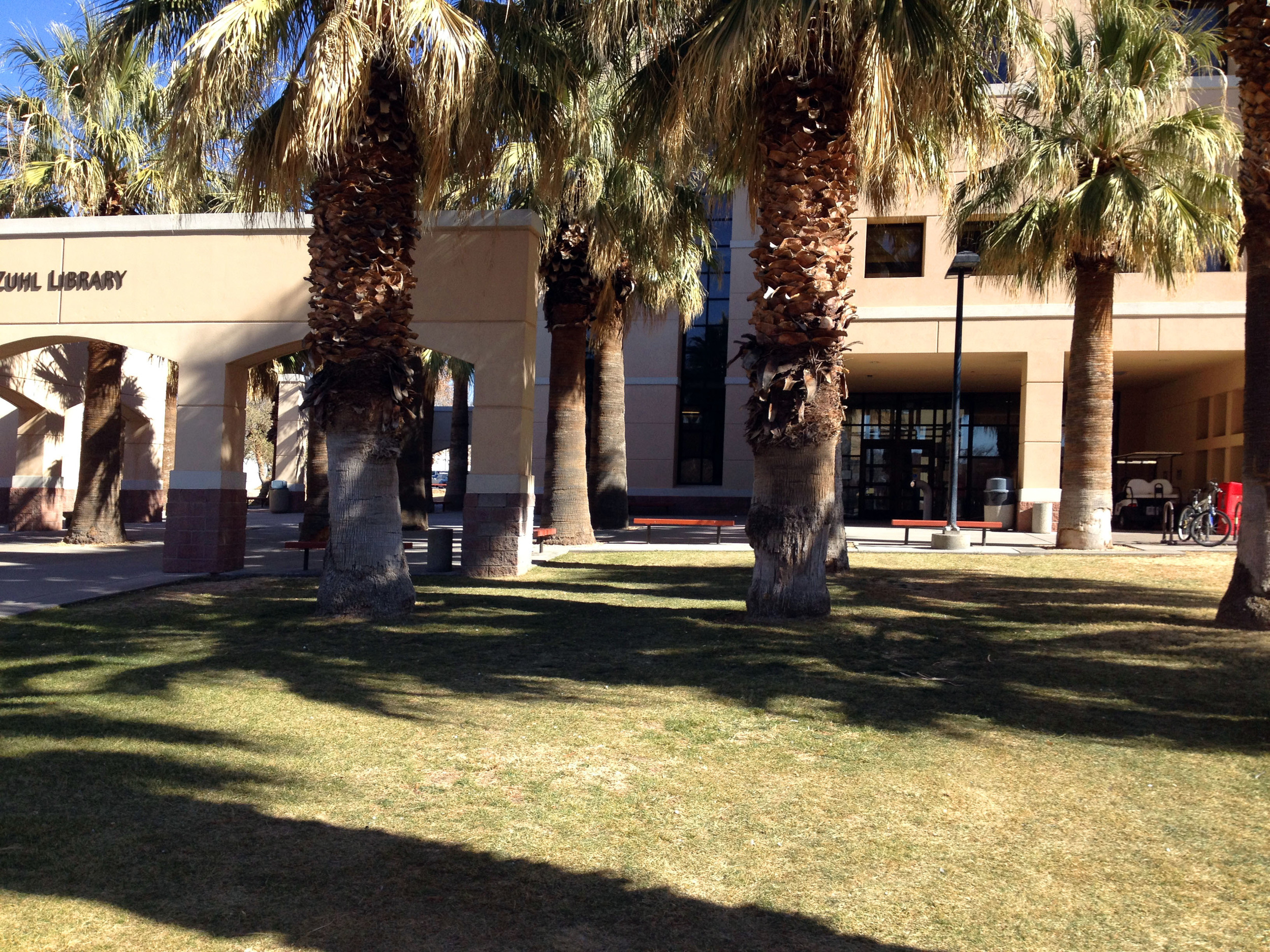 Zuhl library palm trees