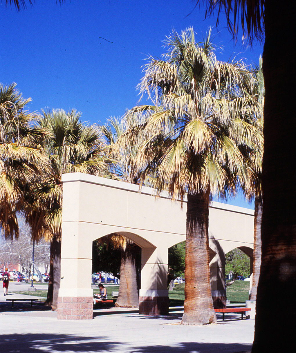 Zuhl library entry and palm trees