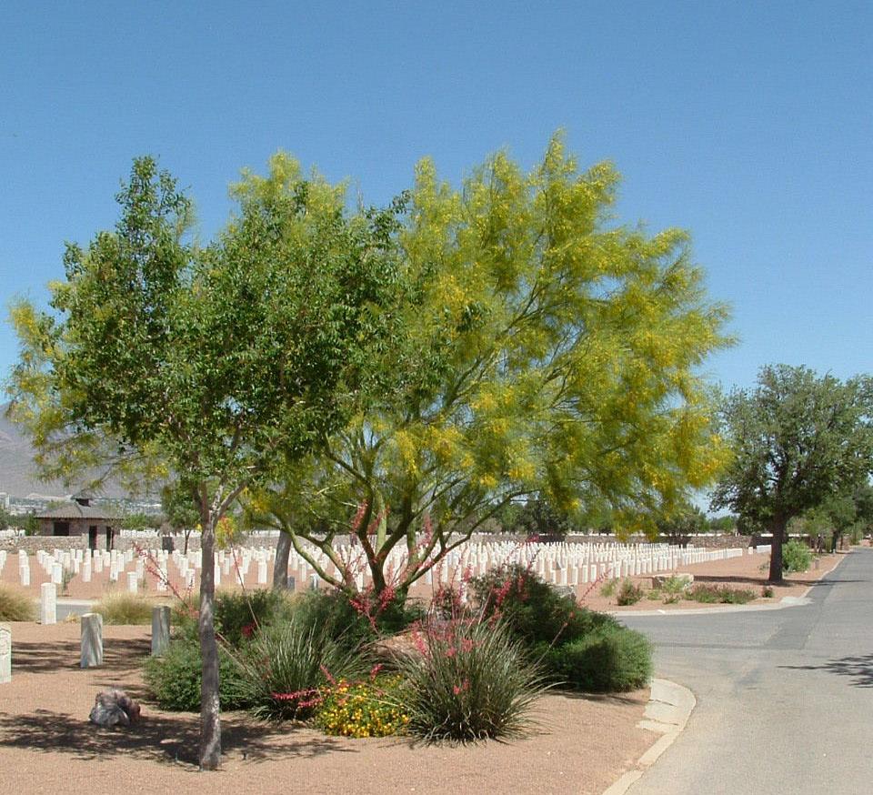 Fort Bliss National Cemetery - xeric landscape design