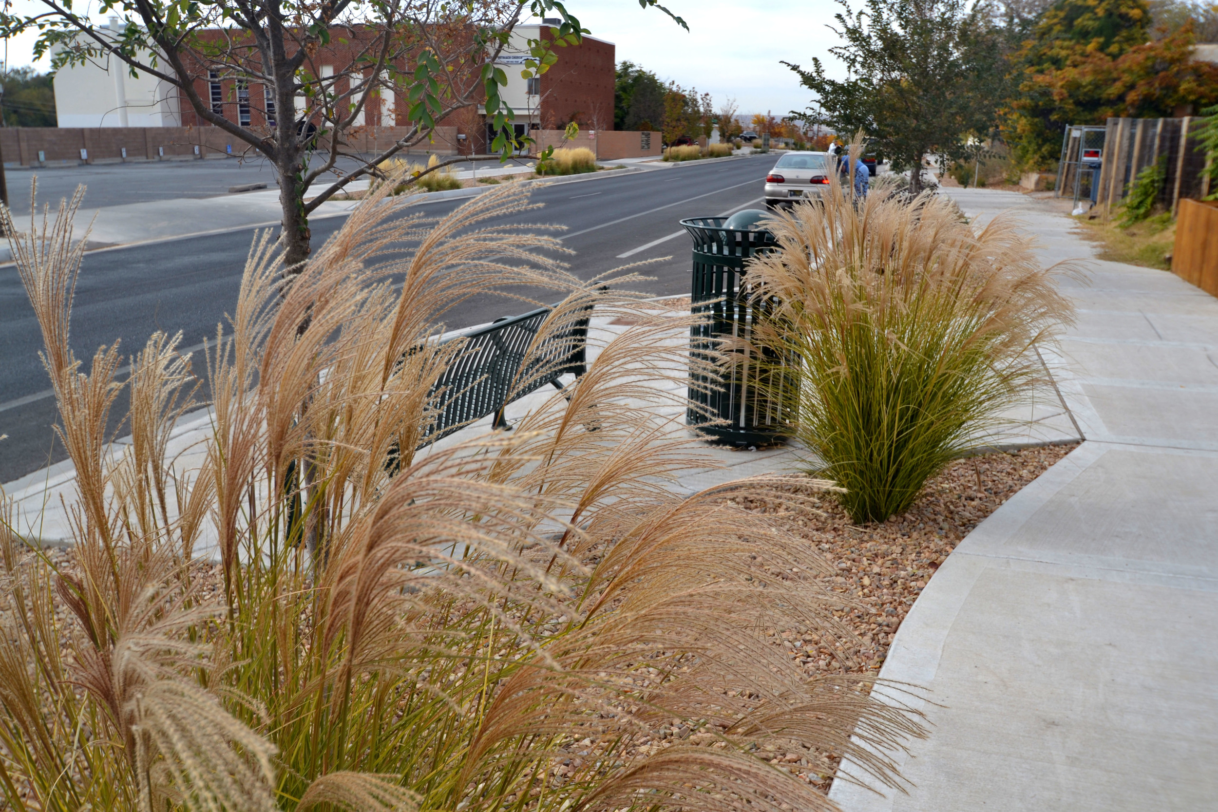 Ornamental grasses add scale and movement to streetscape