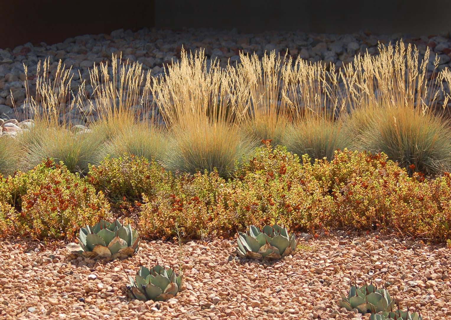 Variety and texture in low water use plants