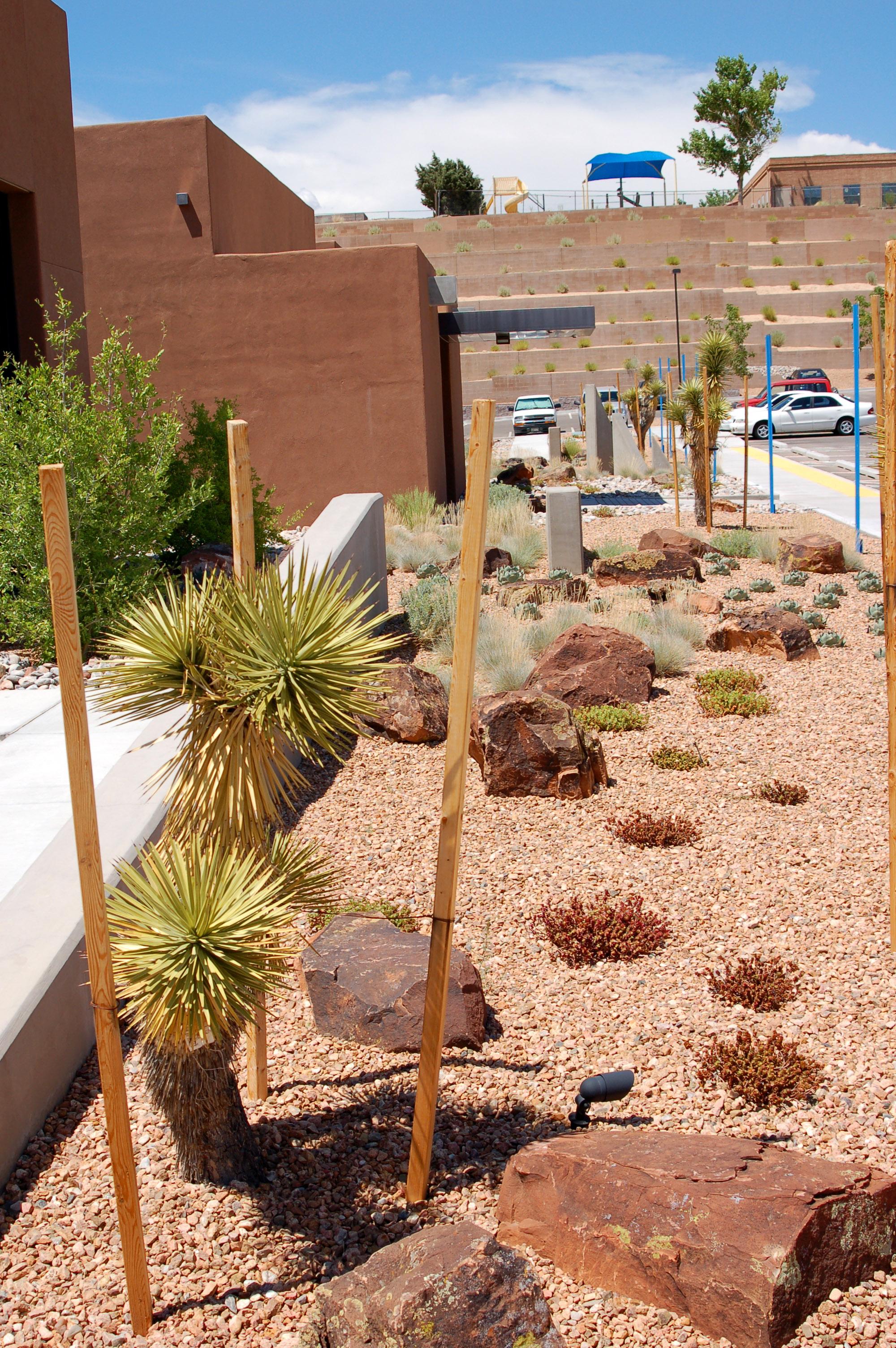 Joshua trees in medical office landscape
