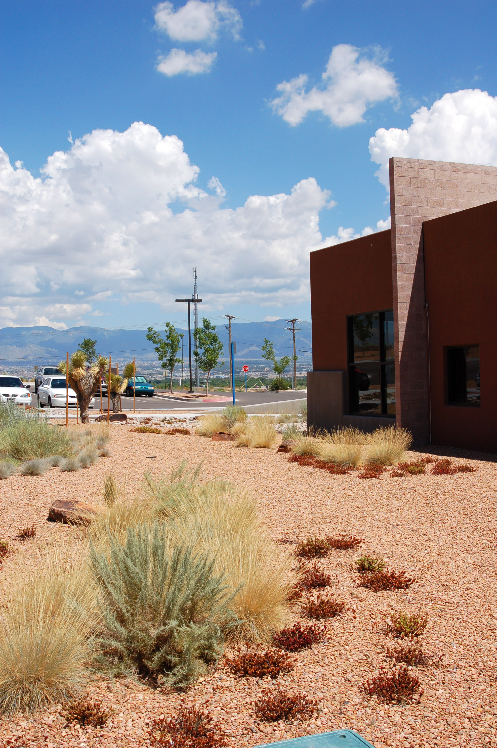 Medical office uses low water ornamental desert plants to create xeric landscape
