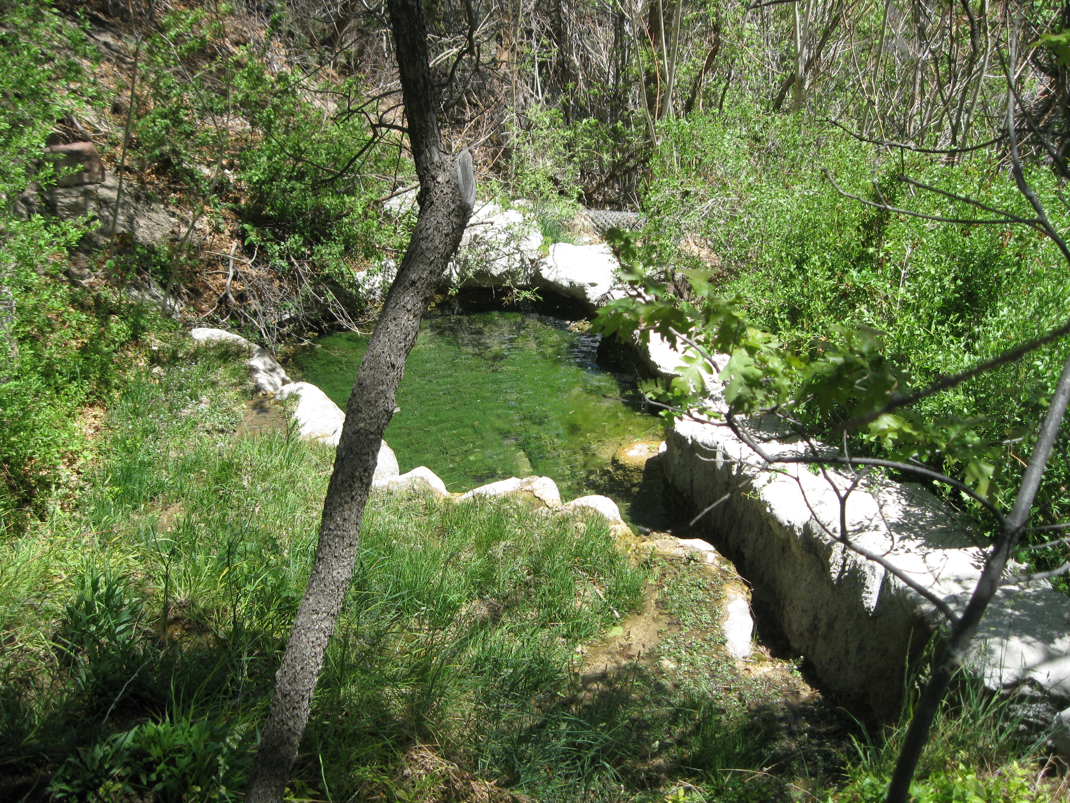 The springs at Carlito Springs