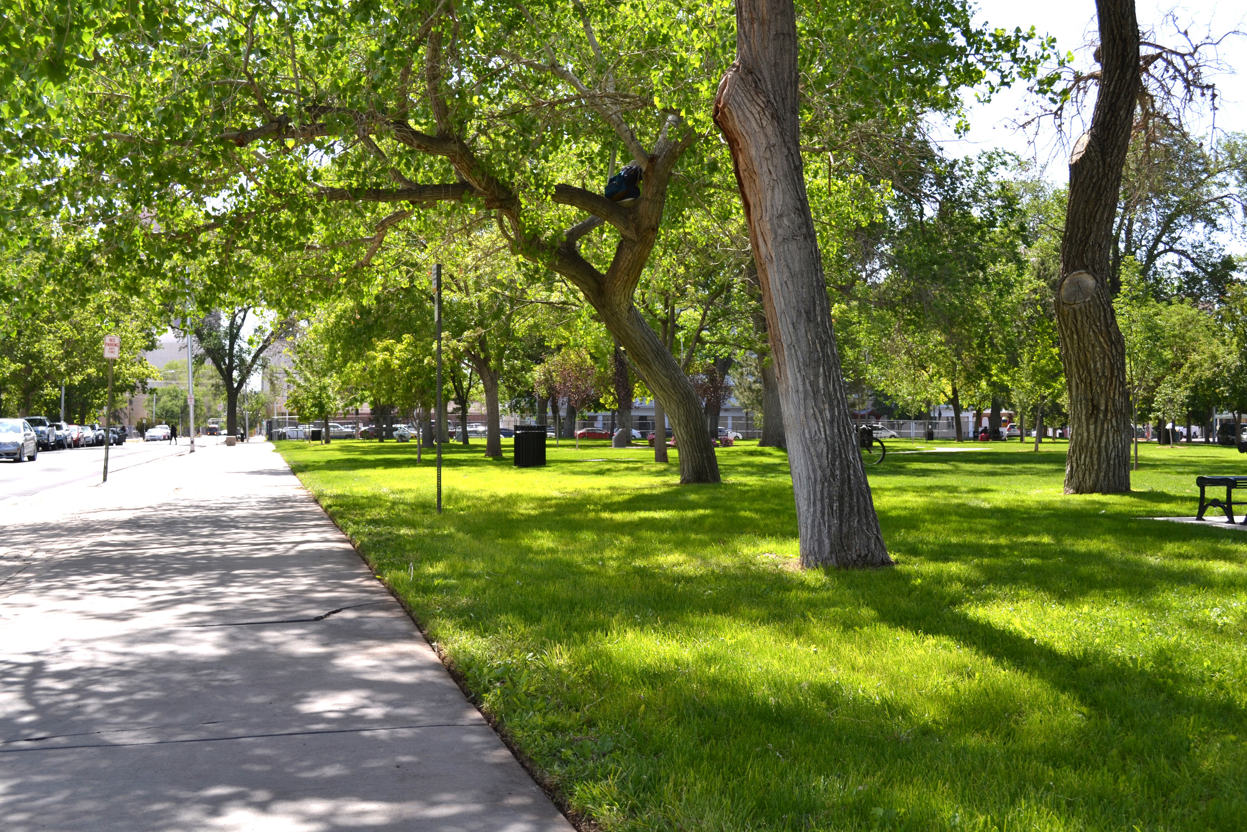 Despite heavy foot traffic, turf now thrives in renovated park