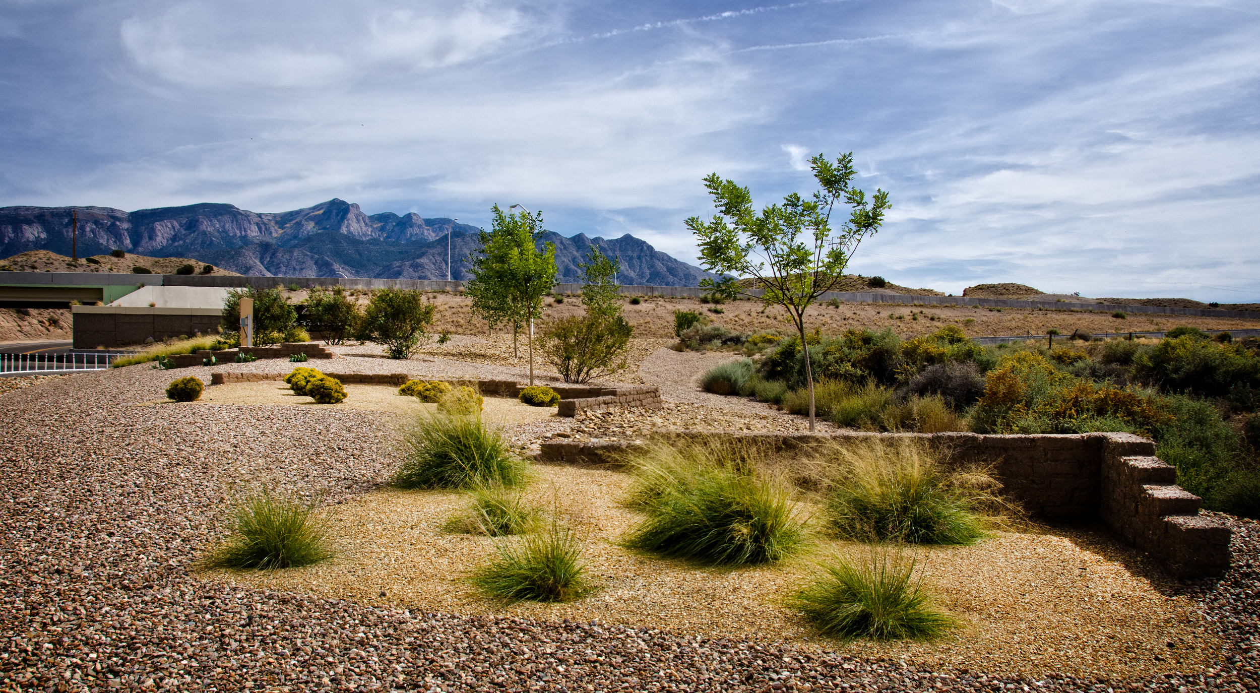 Easy to maintain, drought tolerant plantings