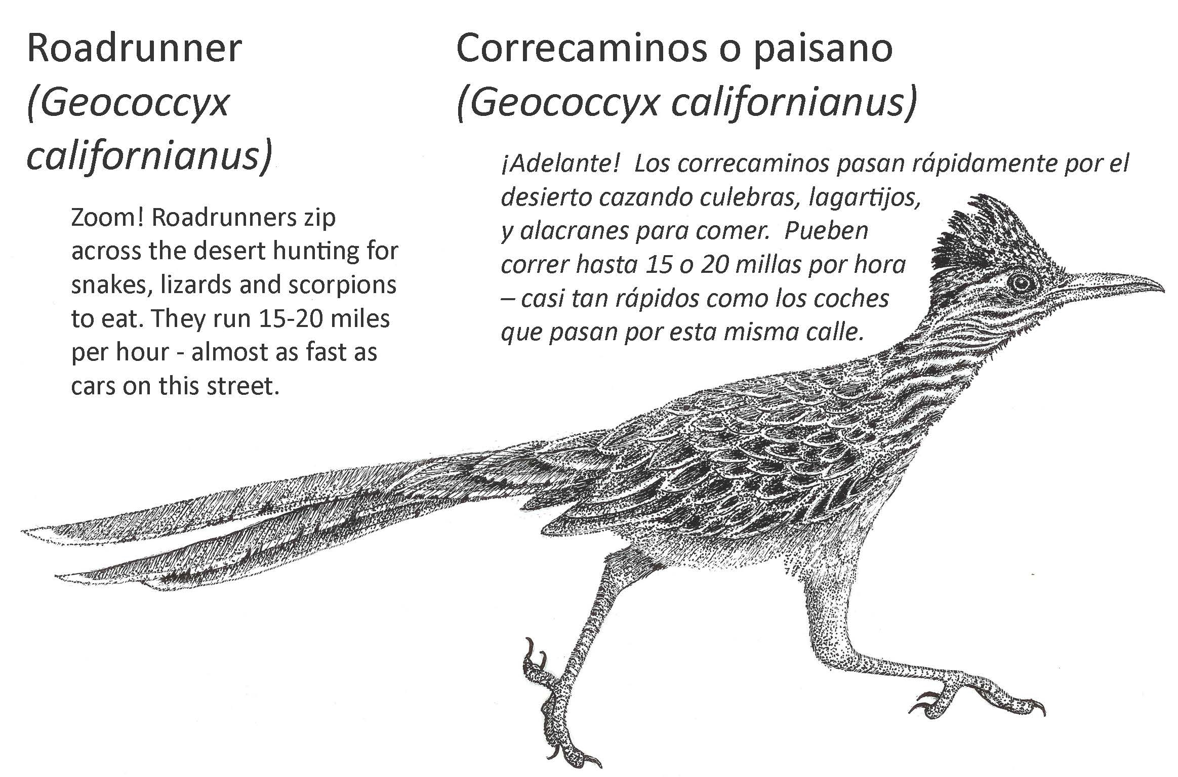 Roadrunner informational sign