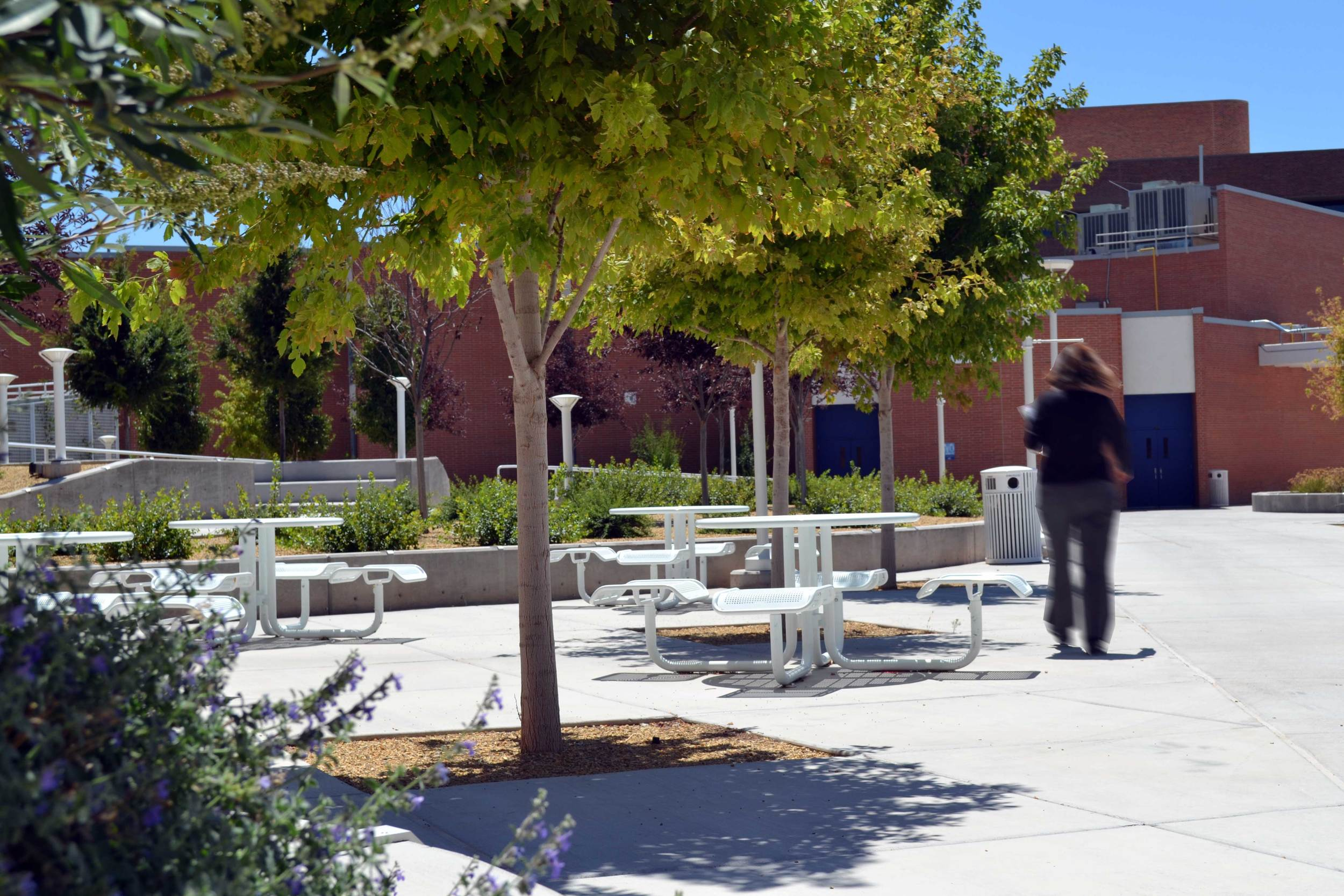 Shade trees are incorporated directly into the plaza paving