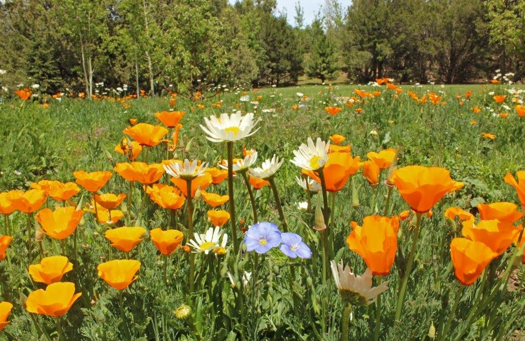 Wildflower pollinator meadow
