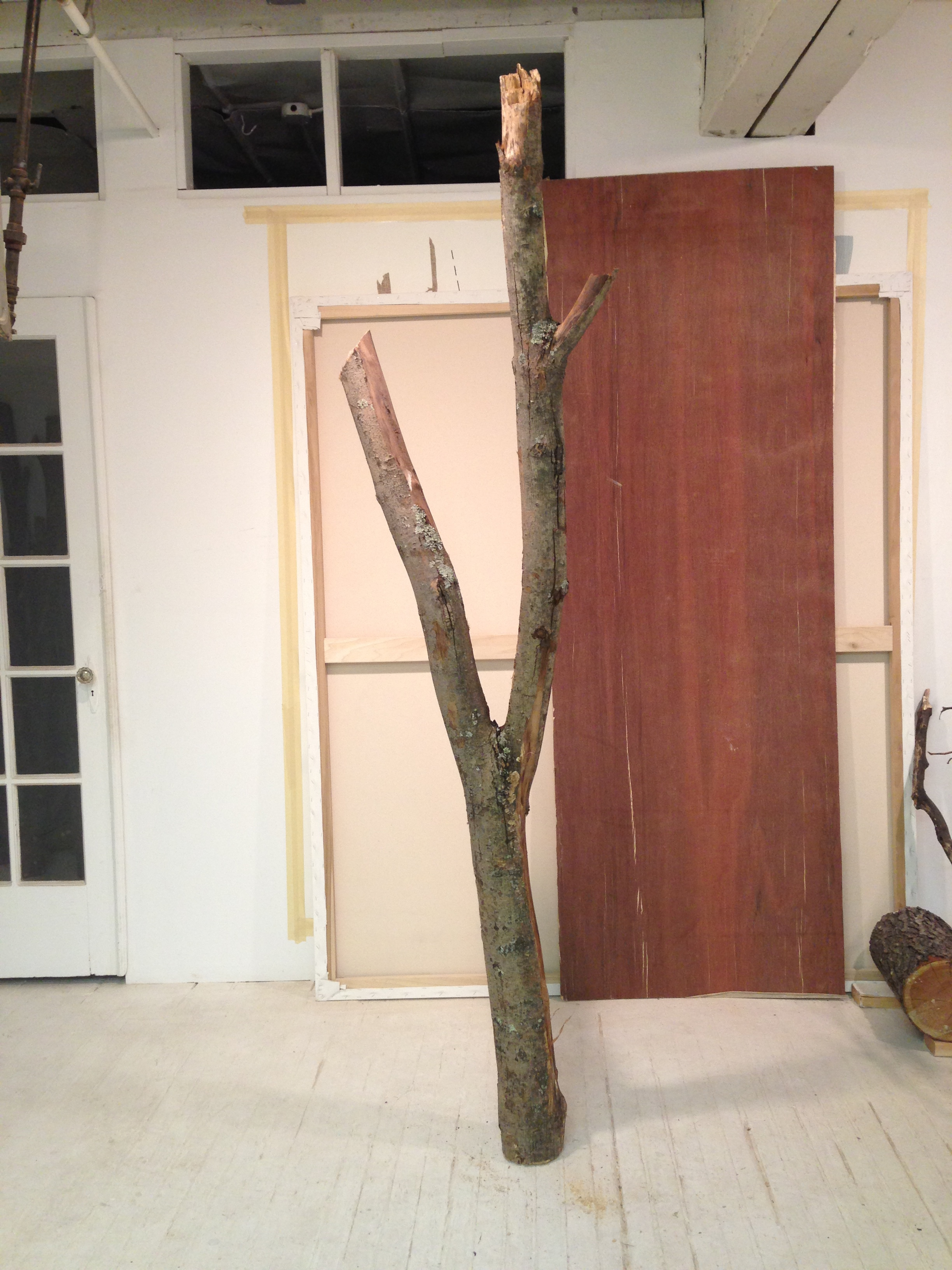 Anchored tree in studio