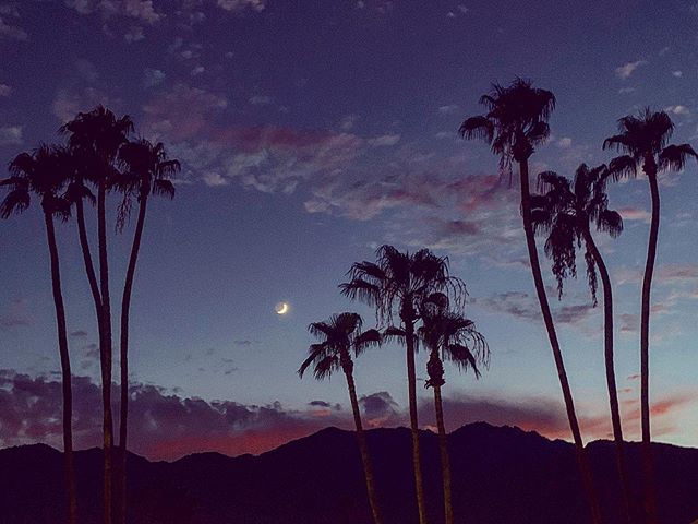 """And I think to myself, """"what a wonderful world."""" 🌴🌙🌵"""