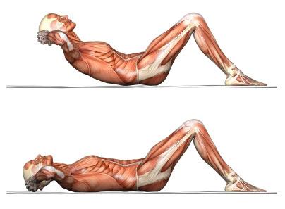 Crunch anatomy.jpg