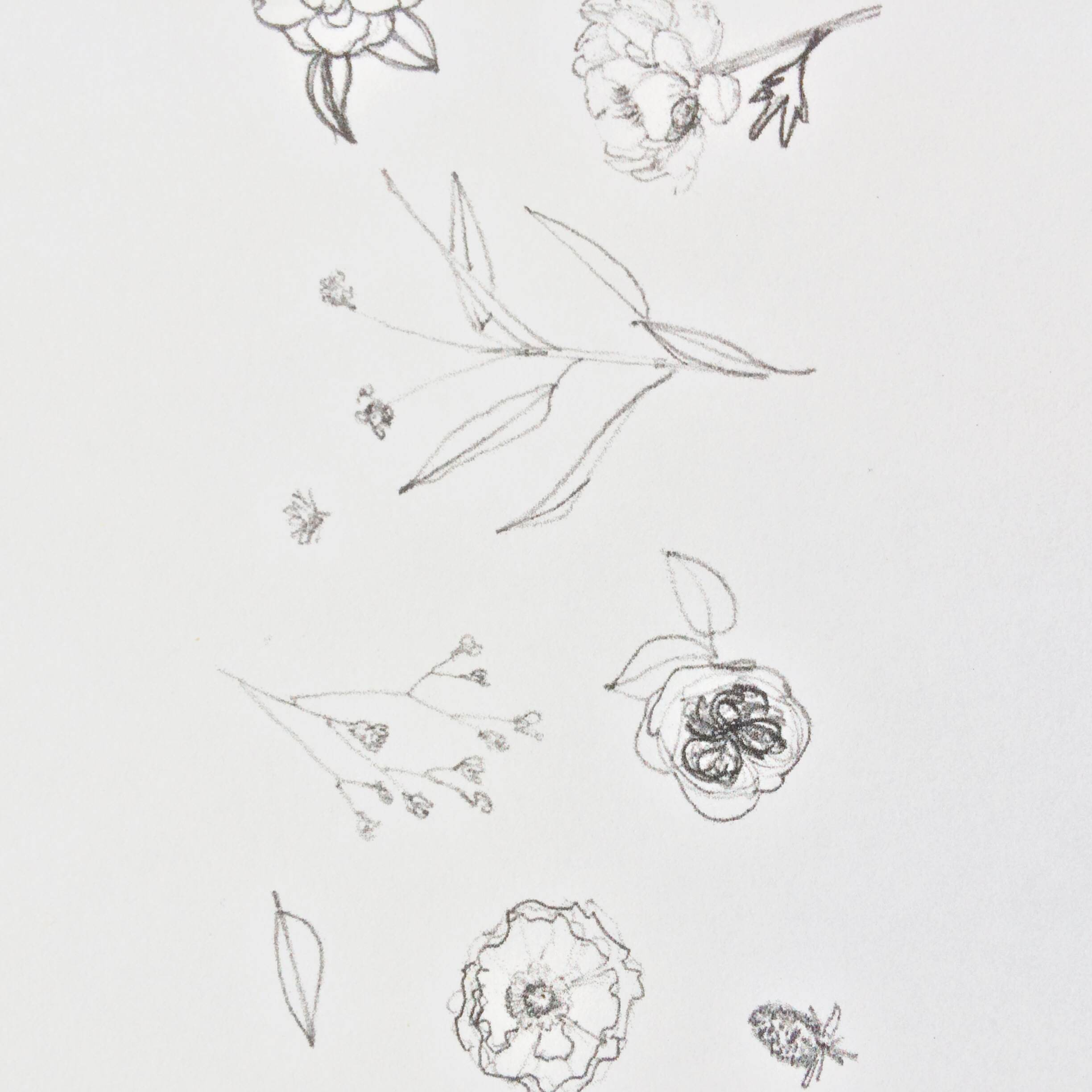 floral sketches by paper & type