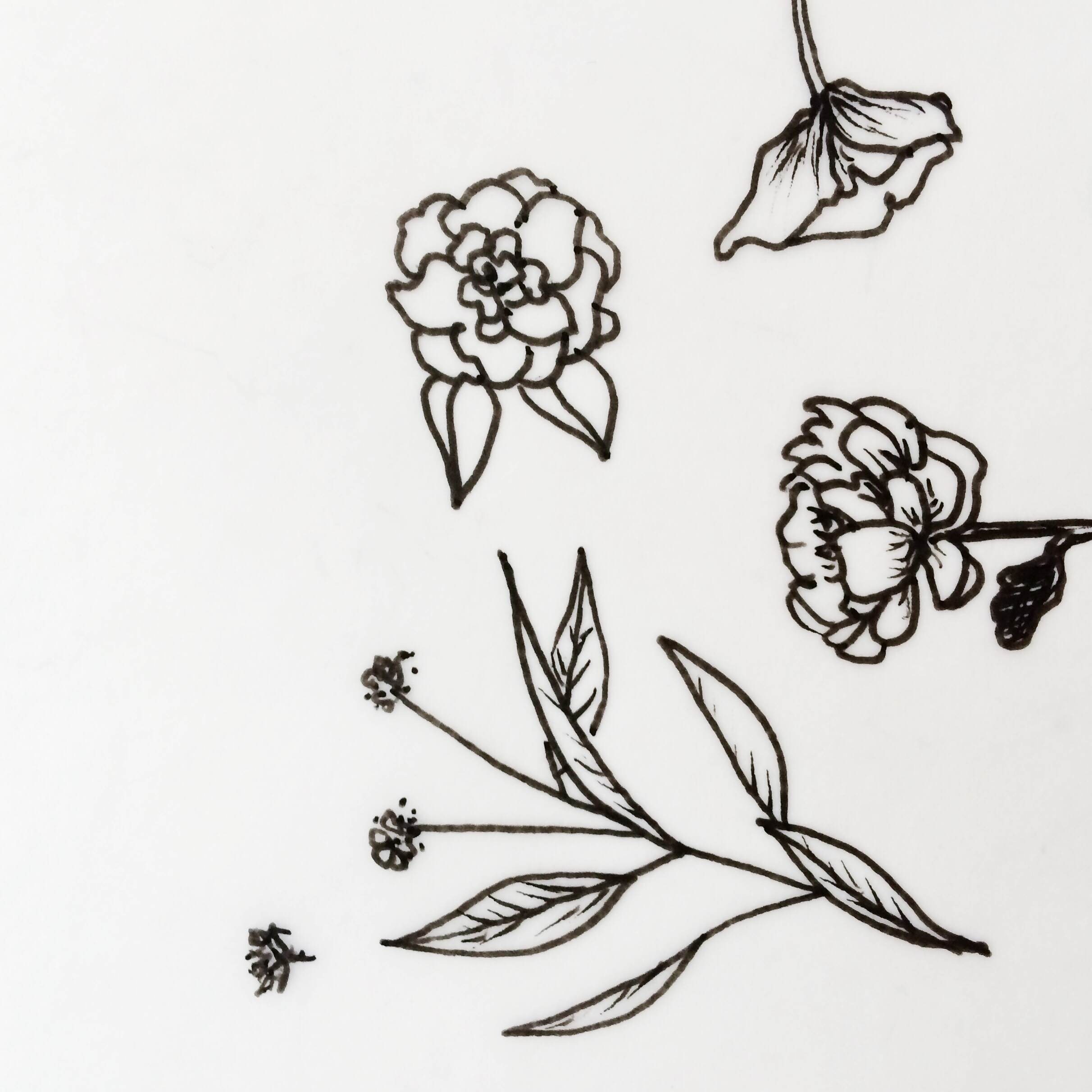 floral illustration by paper & type