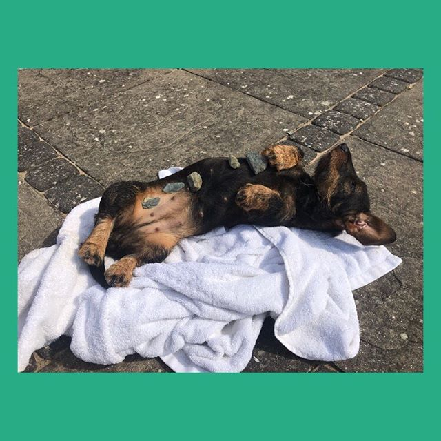 You know you need to treat yourself when @madstandish's dog is more pampered than you 🧘♀️ . . . . #hotstonemassage #hotstones #treatyourselfright #lookafteryourself #selfcare #pamperedpets #spoiltdog #sausagedogpuppy #wirehaireddachshund #spatime