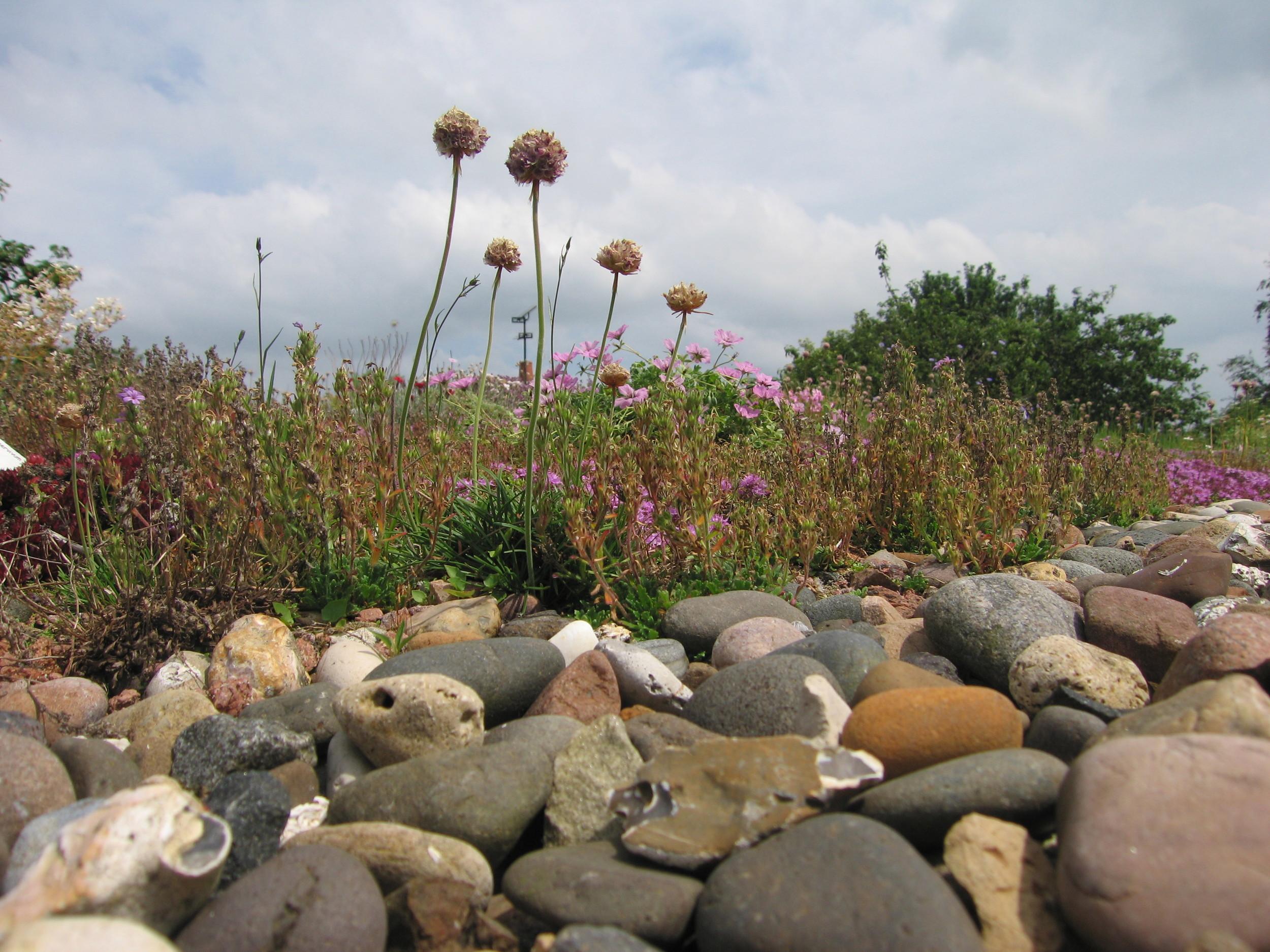 Garden Studio with wild flowers and bio-diversity flourishing on the 'green roof