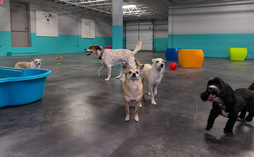 Club-Diogi-Dogs