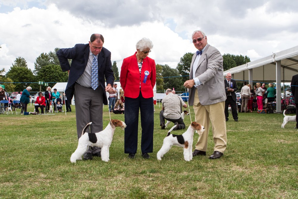 Ch. Travella Striking Steel (Oliver) and Ch. Travella Step Forward (Audrey)winning both CC's at Windsor under breed specialistMrs M. Forman.