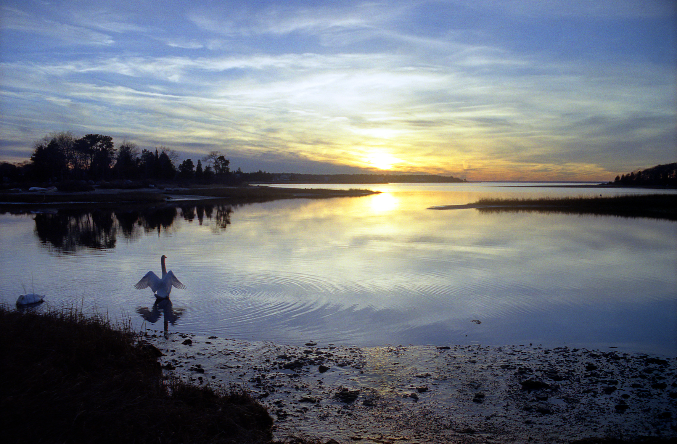 robert manz_swan and sun.jpg