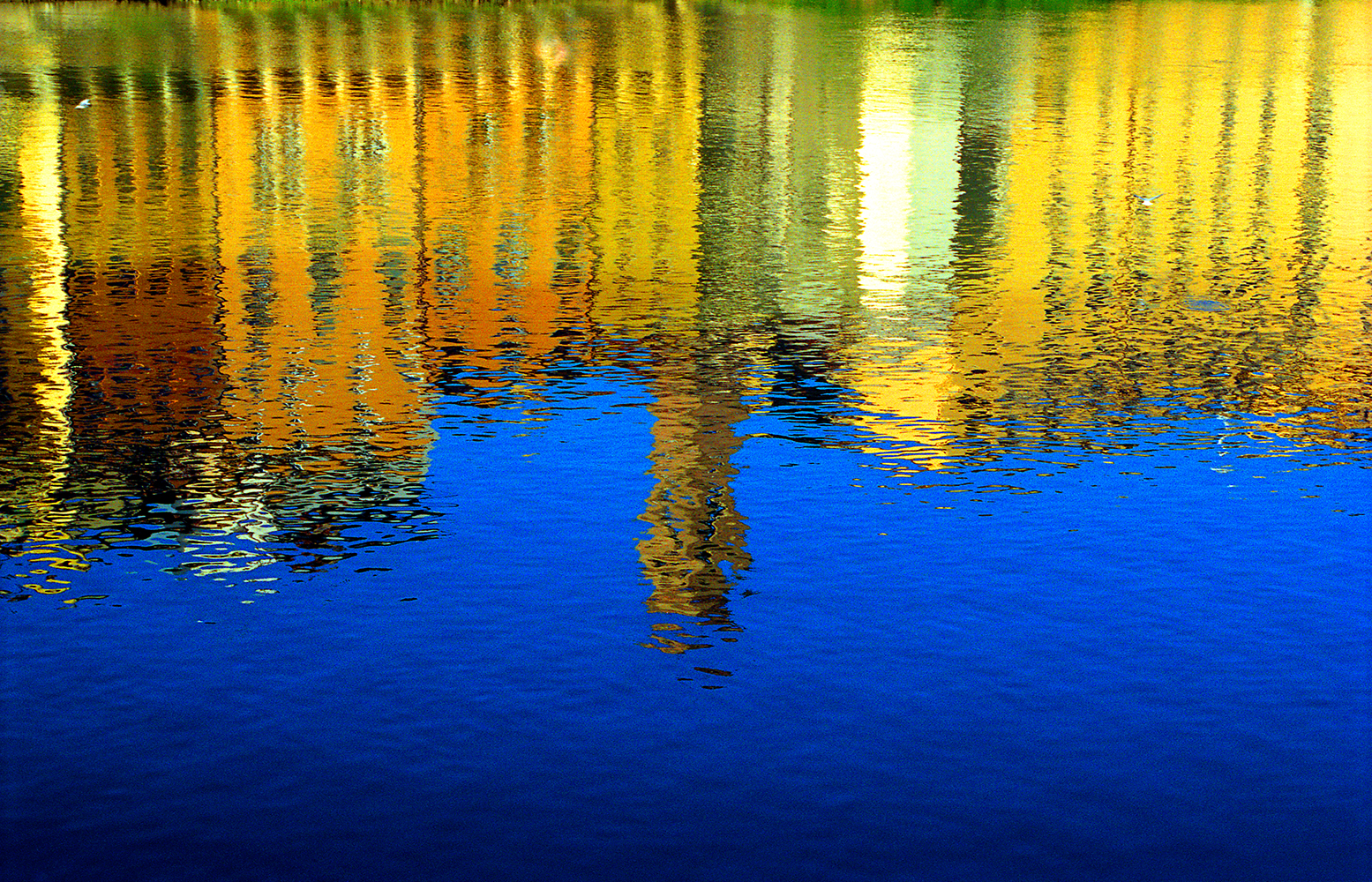 Lungarno Reflections