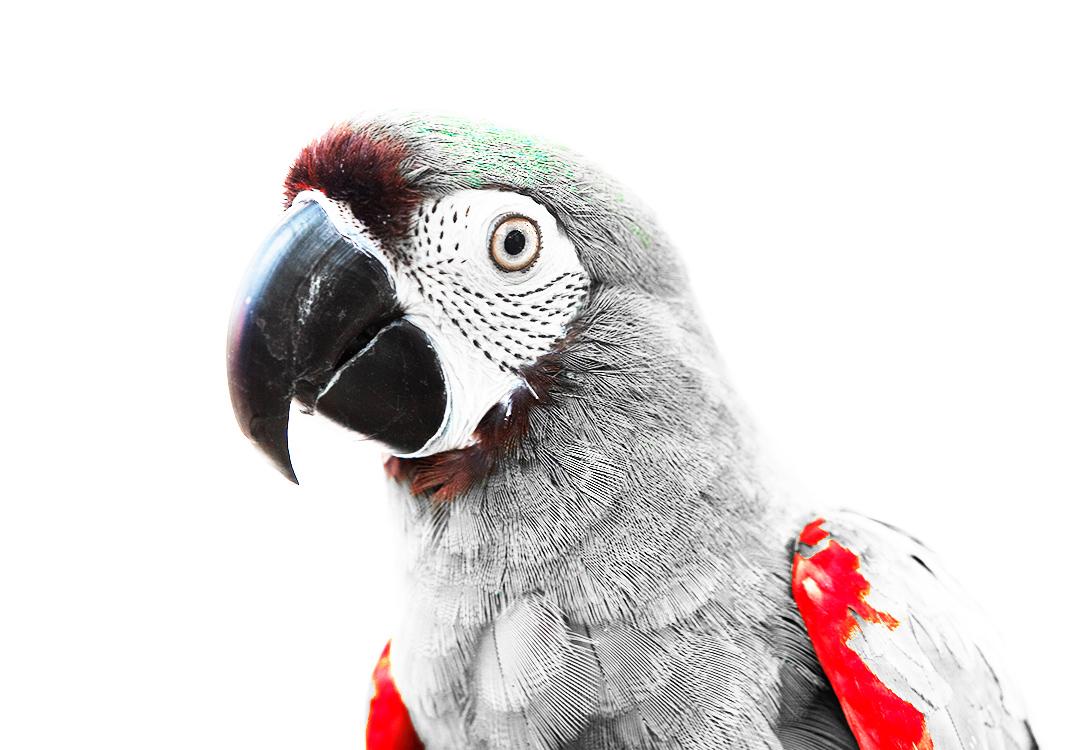 Parrot_3.jpg