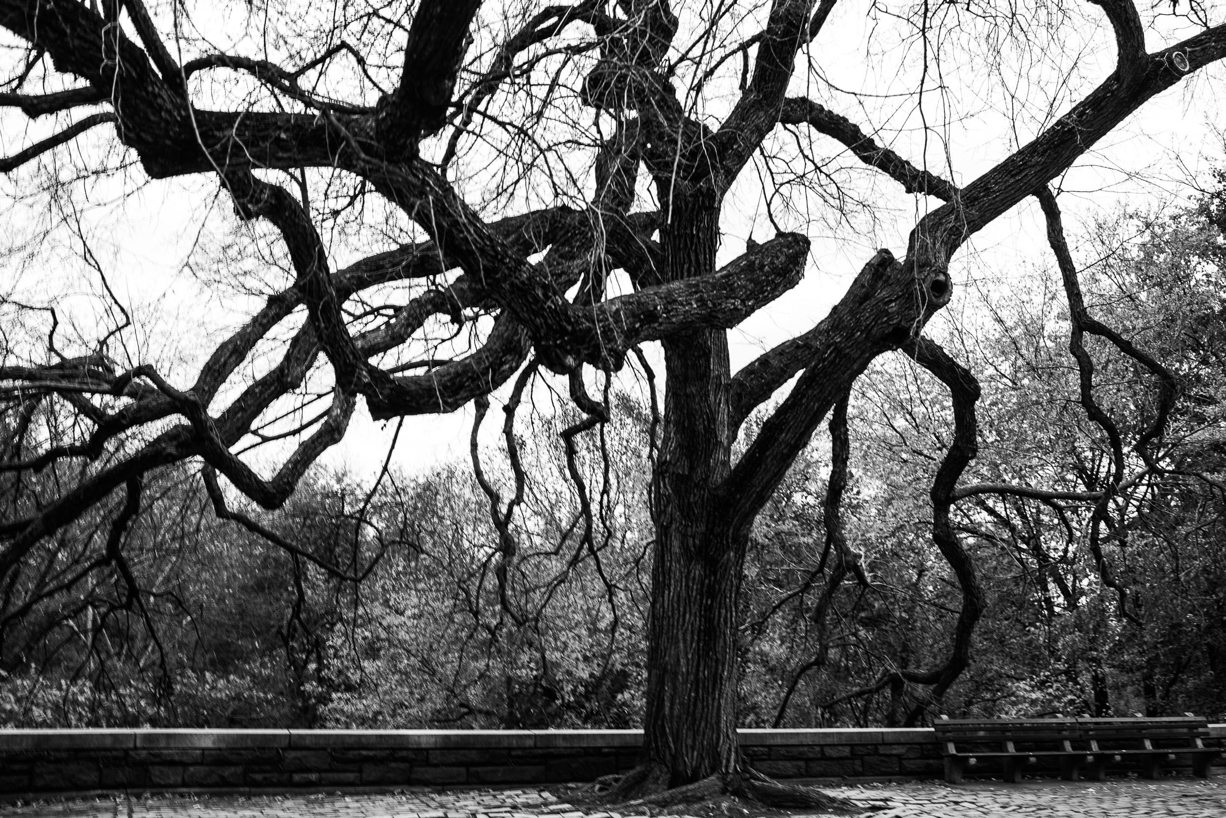 Central Park- Fall.jpg