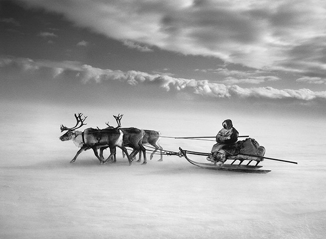 Sebastiao-Salgado_Genesis_The-larger-sledges-are-dr-004.jpg