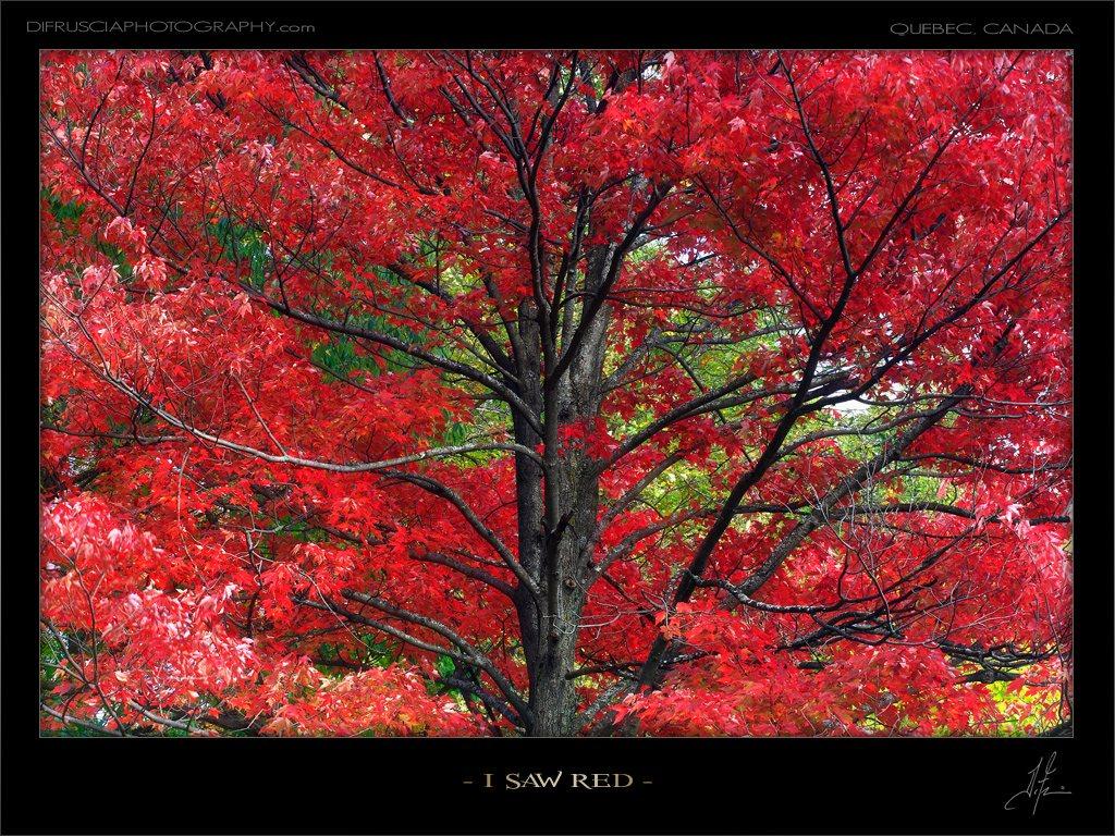 i-saw-red_patrick-di-fruscia.jpg