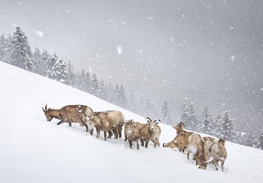 Winner:   The snow herd - Vladimir Medvedev (Russia)