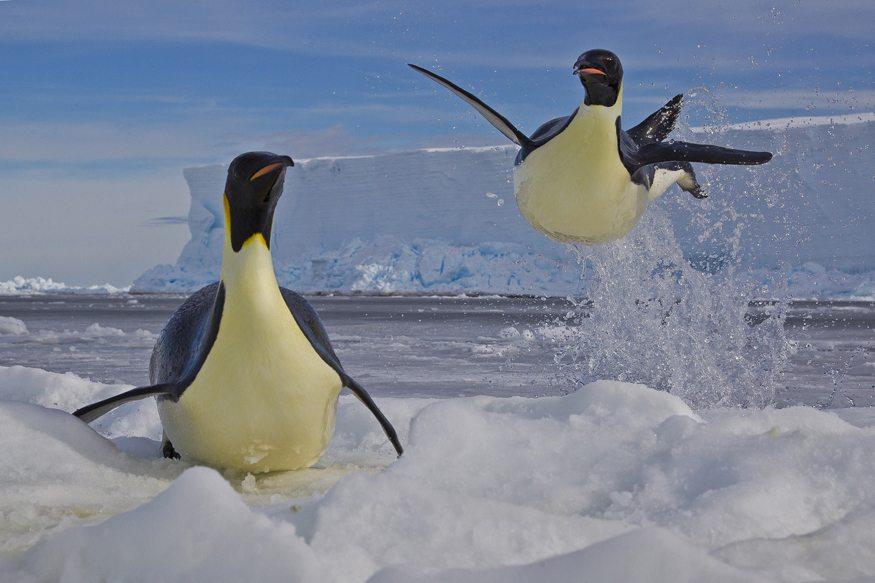 Winner:   Frozen moment -Paul Nicklen (Canada)