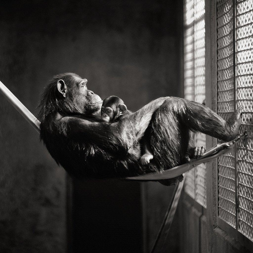 Captivity ©Brian Day