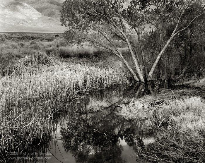 michael-e-gordon_cottonwood-pond.jpg