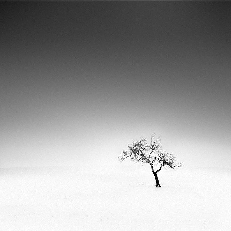 12-olivier-du-tre_lucky-tree.jpg