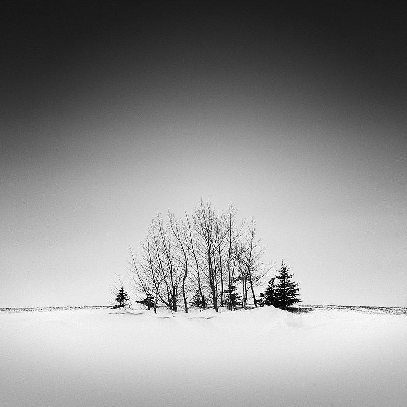 15-olivier-du-tre_trees-in-snow-1.jpg