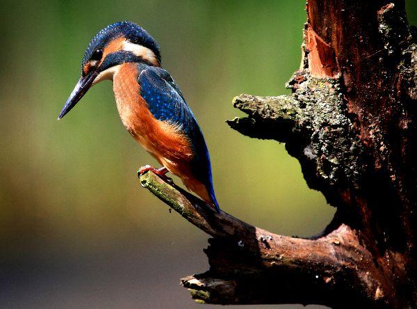 ritzel-zoltaun-hungary-nature-and-wildlife.jpg