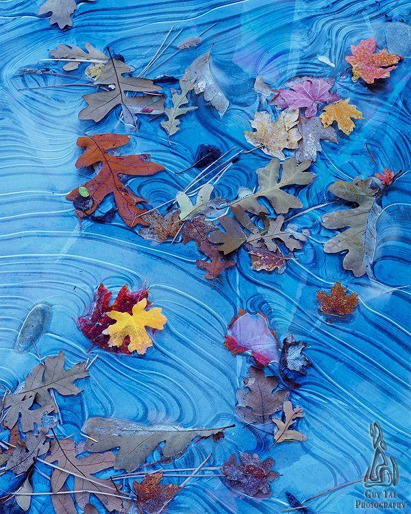 Frozen Fall Leaves - Guy Tal