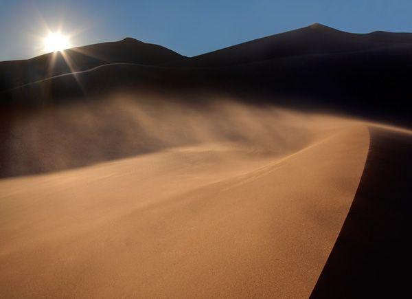 sand-star_ian-plant.jpg