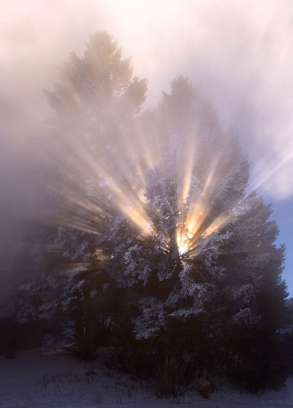 winters-magic_ian-plant.jpg