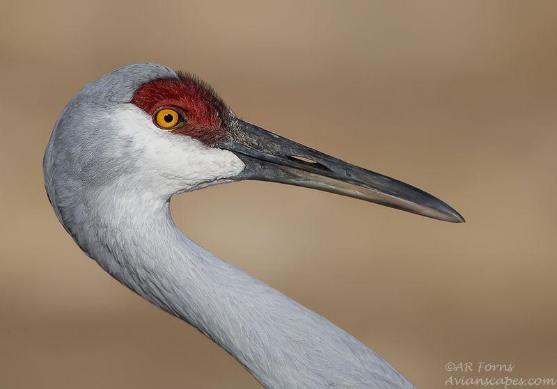 alfred-forns_crane-bosque.jpg