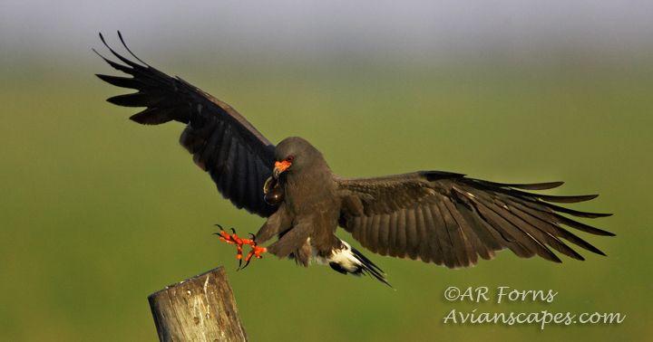 alfred-forns_sanil-kite-landing.jpg