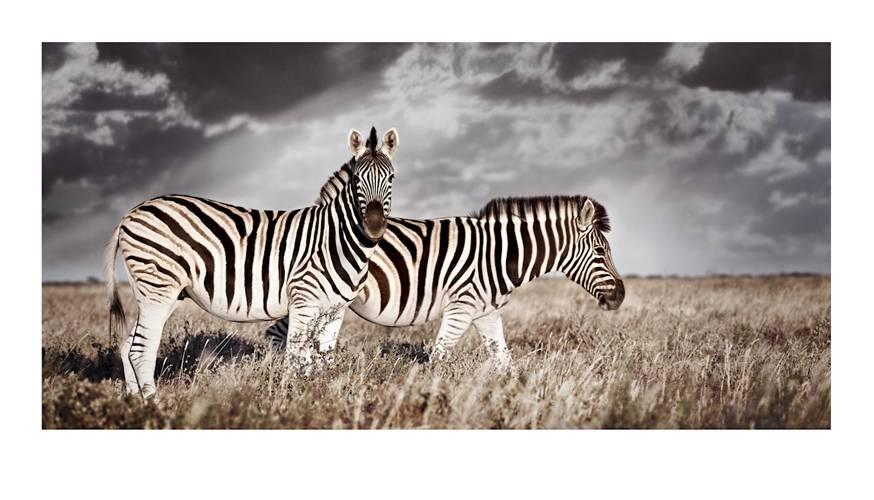 equus-burchelli_duo-2-by-klaus-tiedge.jpg