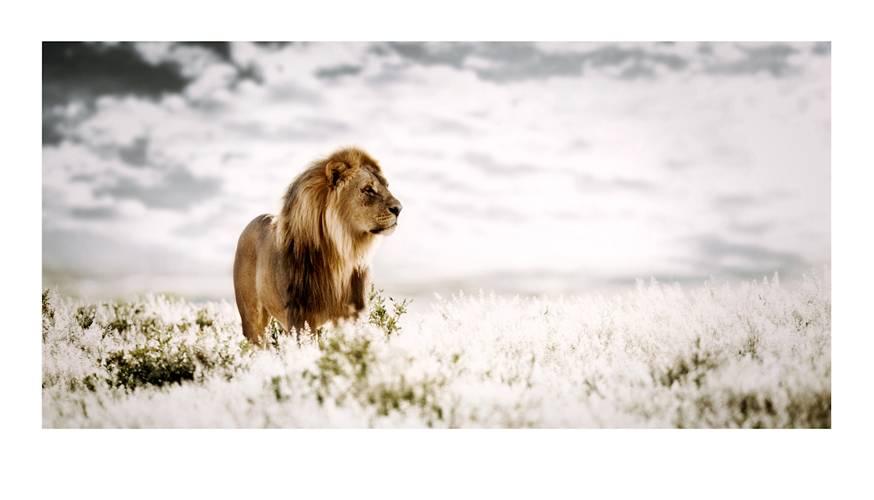 panthera_pride-of-africa-by-klaus-tiedge.jpg