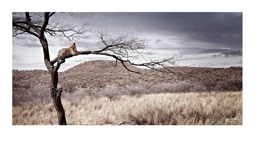 panthera-pardus_sentinel-by-klaus-tiedge.jpg