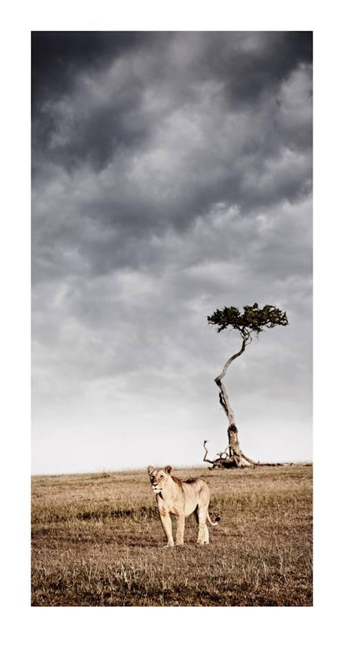 panthera-pardus_solitary-by-klaus-tiedge.jpg