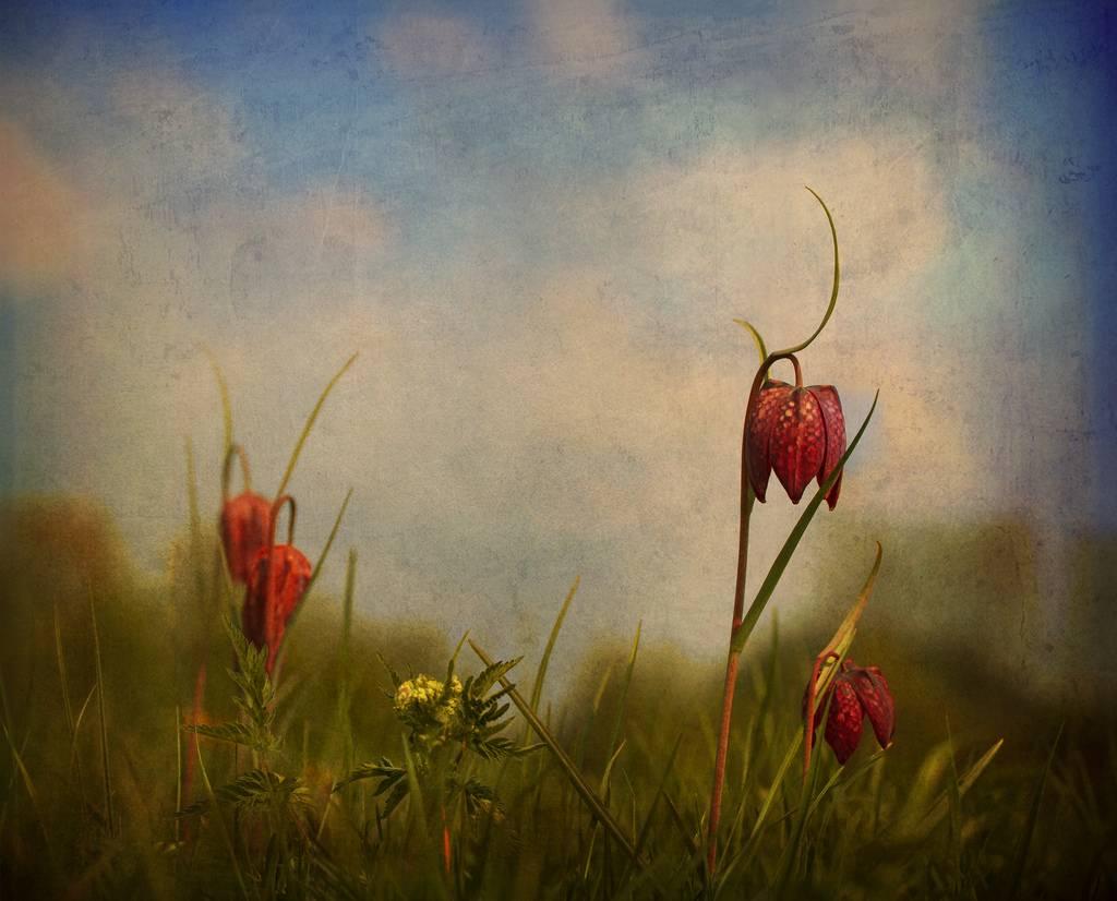 audran-gosling-12.jpg