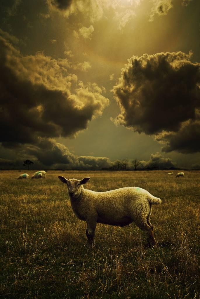audran-gosling-19.jpg