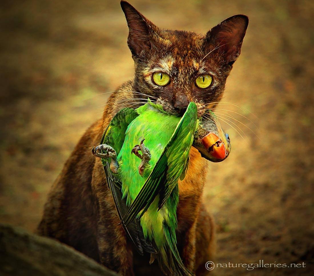 sompob-sasi-smit_cat-and-bird.jpg