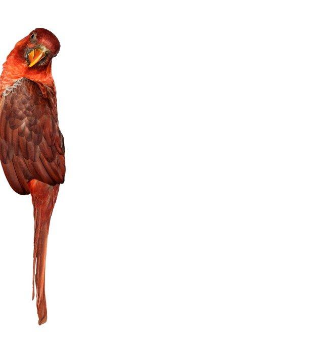 andrew-zuckerman-birds-86.jpg