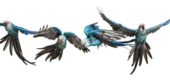 andrew-zuckerman-birds-1.jpg